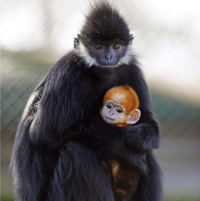 monkey's mother's day