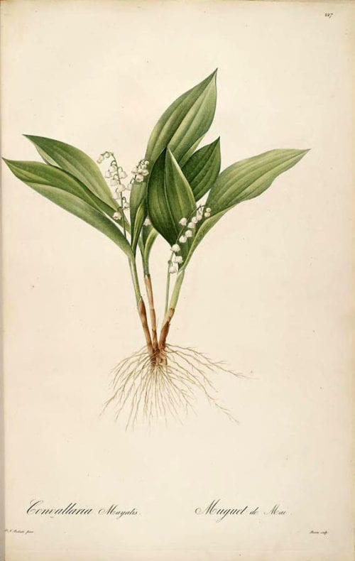 perfume lily of the valley print Flickr