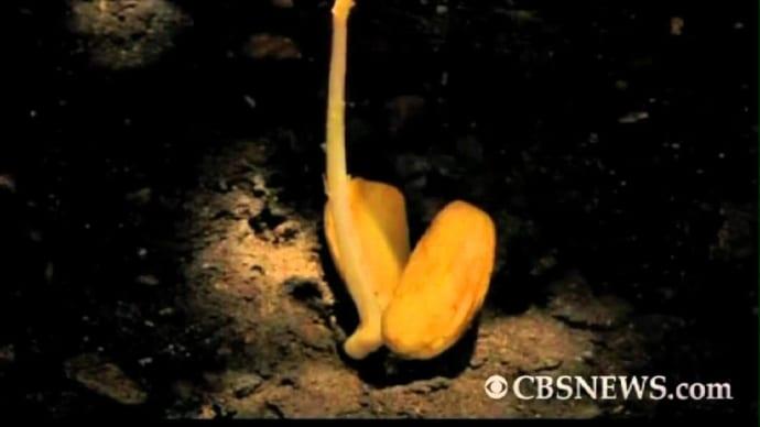 acorn into oak tree: 8 months in 3 mins